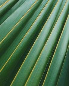 summer pattern texture plant